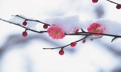 Настроение дня - весна