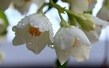 Настроение дня — цветы после дождя