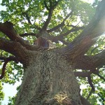 Медитация «Корни дерева»