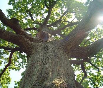Медитация Корни дерева
