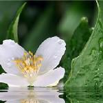 Настроение дня — аромат первых цветов