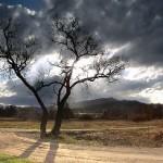 Притча «Ствол дерева»