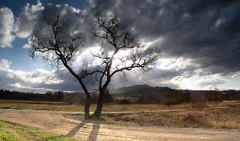 Притча Ствол дерева