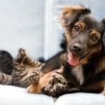 Как домашние животные влияют на энергетику дома