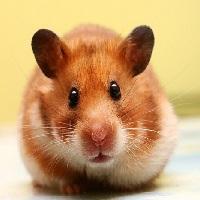 Как домашние животные влияют на энергетику дома.7