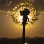 Настроение дня — мгновение
