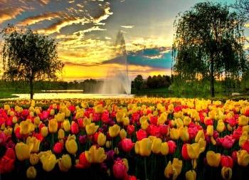 Настроение дня — яркий мир