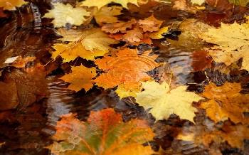 Настроение дня - осень