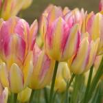 Настроение дня — весна