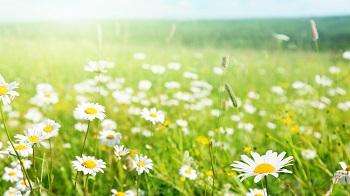 Настроение дня — лето, свобода, жизнь